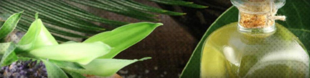 Top 10 des avantages et des utilisations de l'huile d'eucalyptus