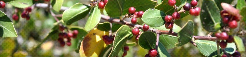 Les bienfaits de l'huile de jojoba