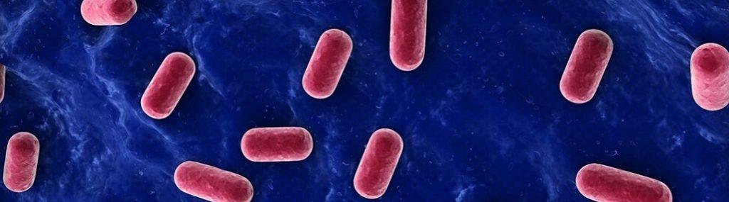 Les bienfaits des probiotiques