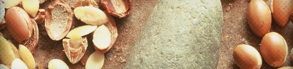 Les utilisations possibles de l'huile d'argan