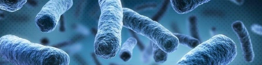 Bienfaits des enzymes digestives sur la santé