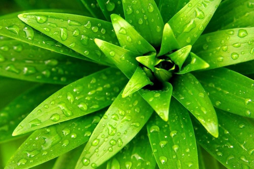 3 plantes pour stimuler la circulation sanguine