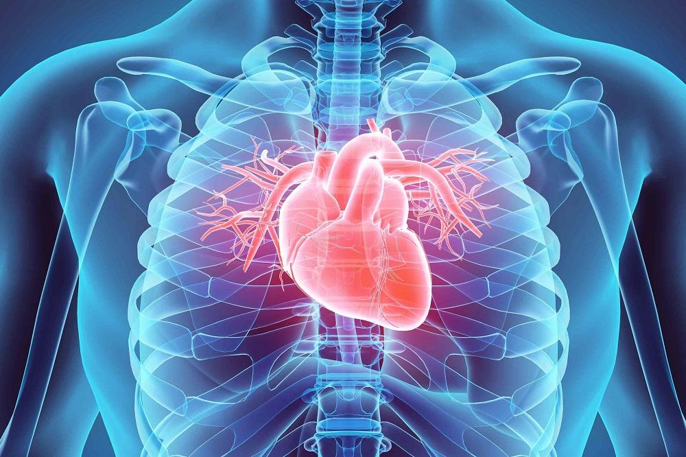 3 vitamines pour le système cardiovasculaire