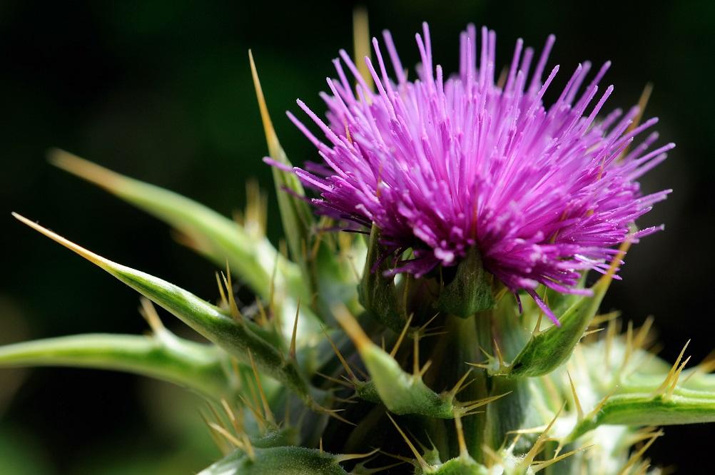 5 plantes et vitamines pour la cirrhose