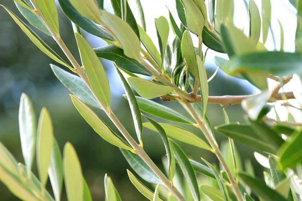 5 plantes pour traiter la candidose