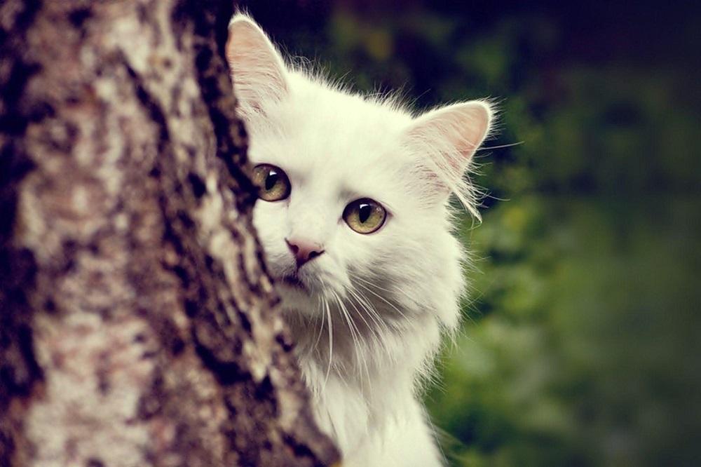 6 façons d'améliorer le pelage et la peau de votre chat