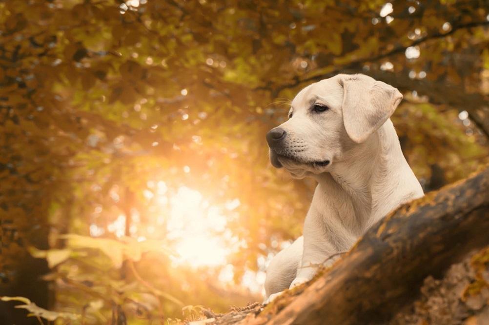 6 suppléments naturels si votre chien souffre d'arthrite