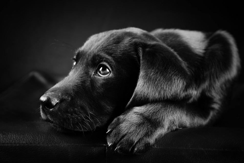 8 produits utiles pour les chiens âgés