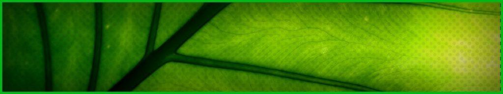 Bienfaits de la chlorophylle sur la santé