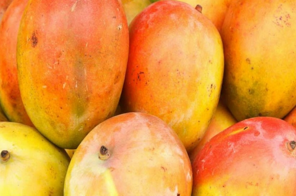 Bienfaits de la mangue africaine sur la santé