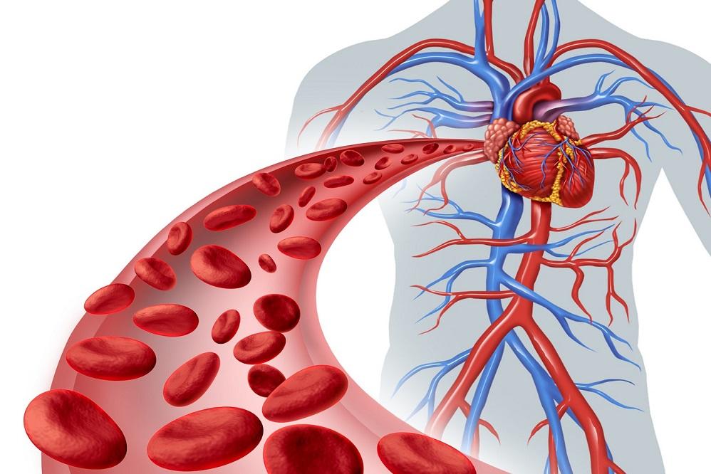 Comment améliorer naturellement votre circulation sanguine ?
