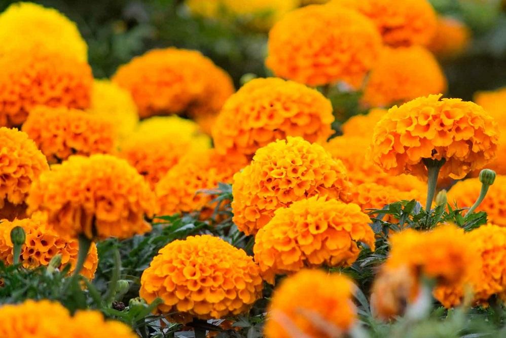Des fleurs aux vertus surprenantes