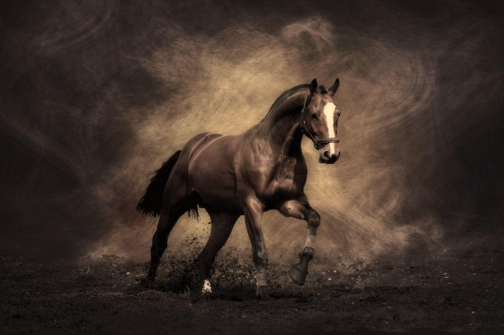 Guide des suppléments pour articulations de chevaux