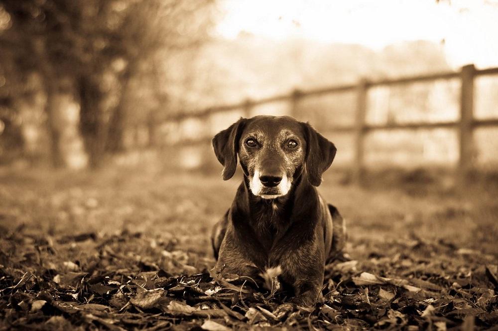 Les 7 meilleurs suppléments pour chiens âgés