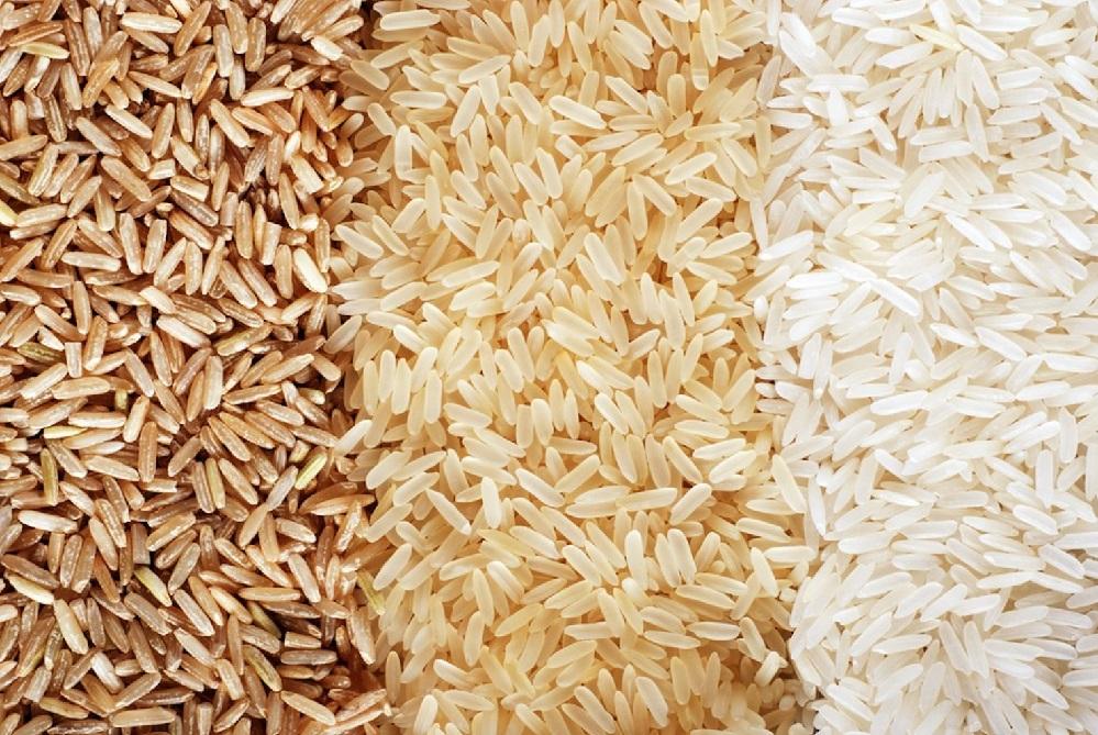 Les bienfaits de la protéine de riz brun : pour perdre du poids, développer les muscles et plus encore