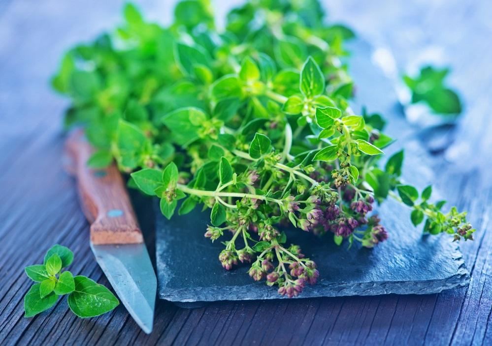 Les bienfaits de la marjolaine : pour la digestion, la santé cardiaque et plus encore