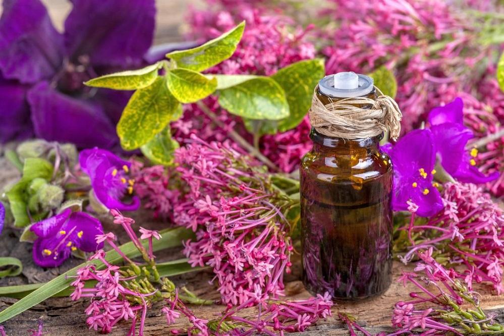 Bienfaits de l'huile essentielle de sauge sclarée sur la santé