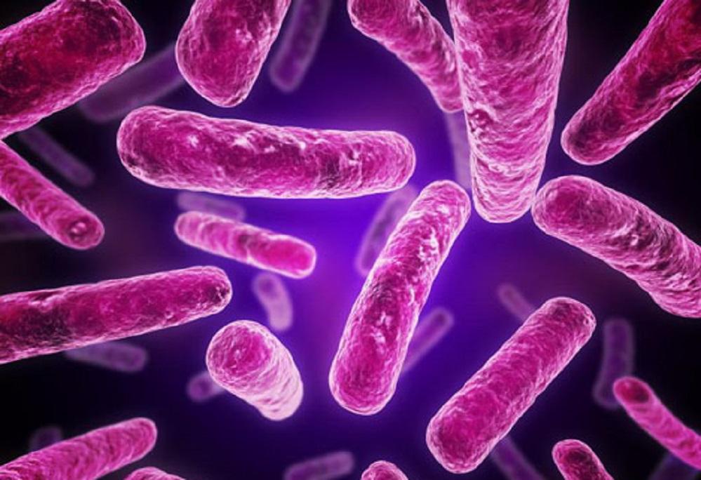 Les bienfaits des enzymes protéolytiques : pour réduire l'inflammation et renforcer le système immunitaire