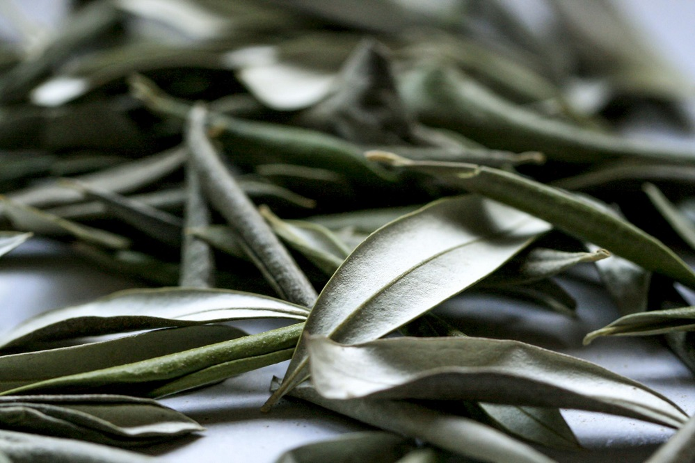 Les bienfaits des feuilles d'olivier : pour la santé cardiovasculaire, la fonction cérébrale et plus encore
