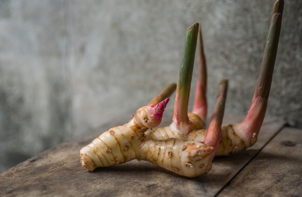 Les bienfaits du galanga : pour les maux d'estomac, le cancer et plus encore