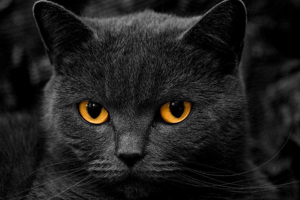 4 remèdes pour chat pour une fourrure saine et brillante