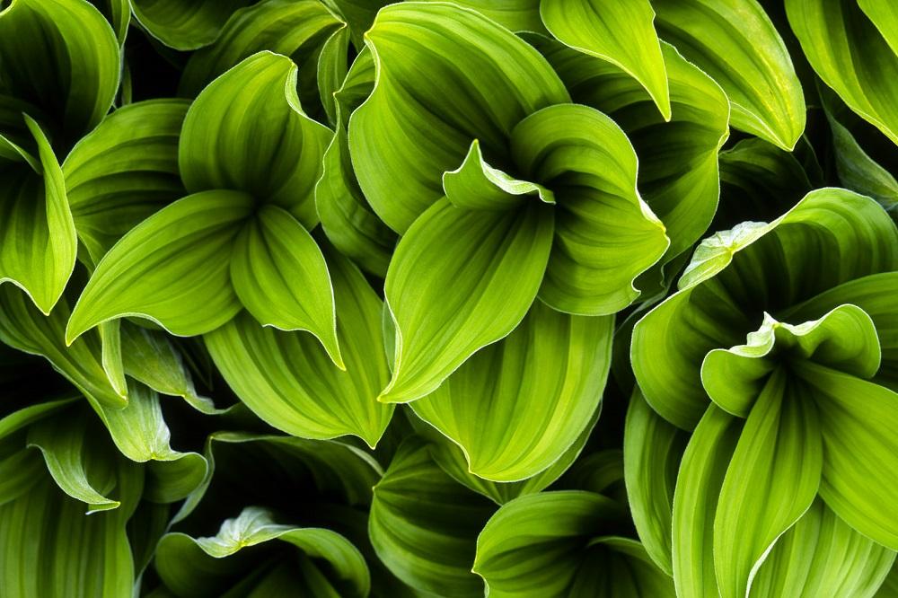 TOP 10 des plantes coupe-faim pour perdre du poids