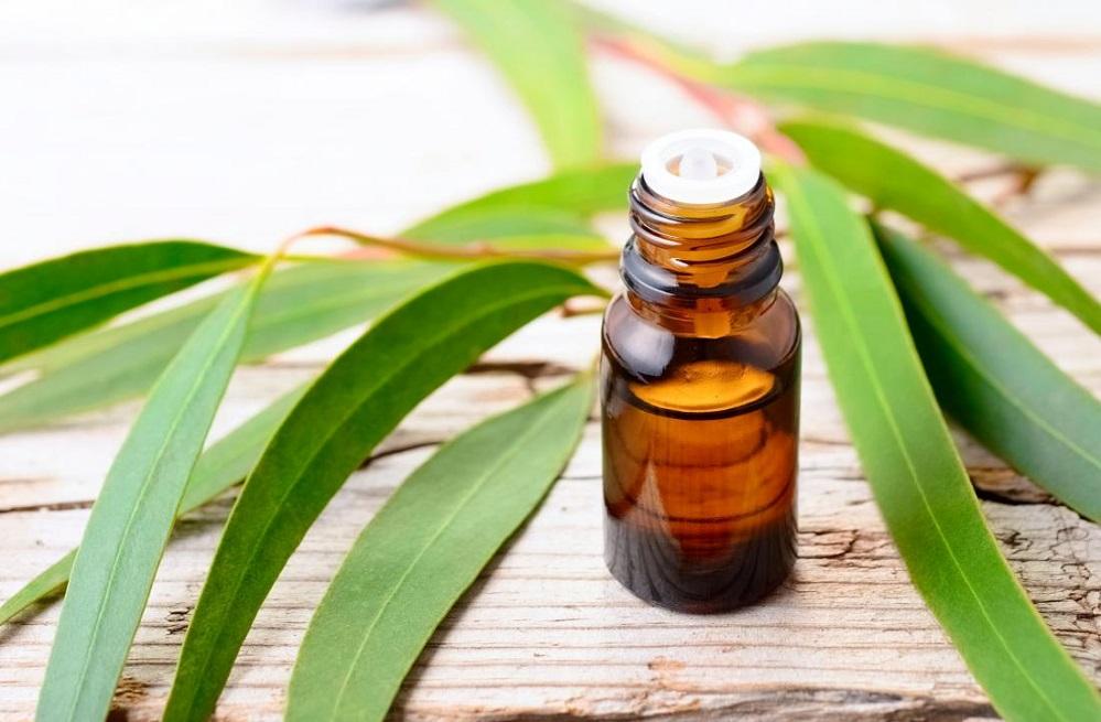 Bienfaits de l'huile essentielle d'eucalyptus sur la santé
