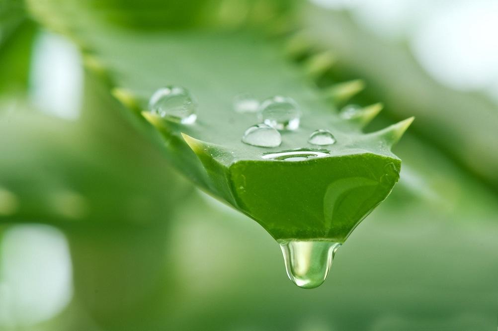 L'aloe vera peut-il traiter l'eczéma ?