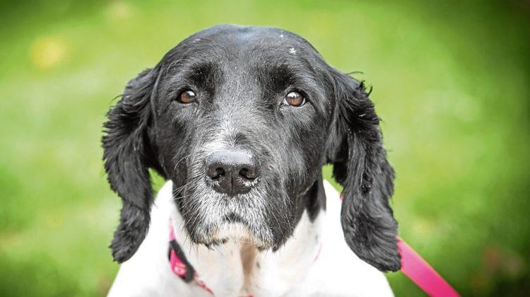 Les meilleurs suppléments articulaires pour chiens