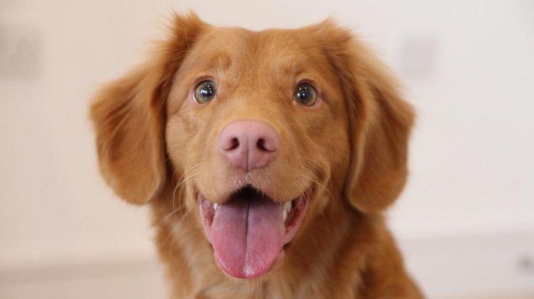 3 bienfaits de l'aneth pour la santé de votre chien