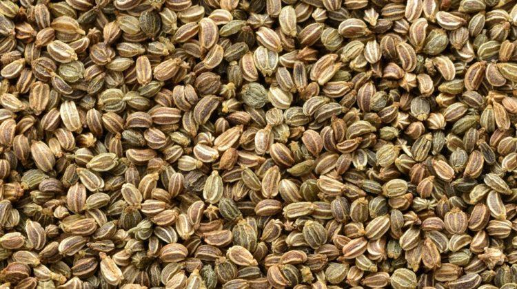 6 raisons de manger des graines de céleri