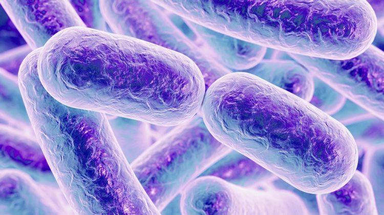8 bienfaits des probiotiques pour la santé