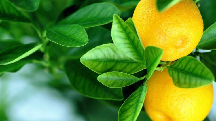 Bienfaits de la diosmine sur la santé