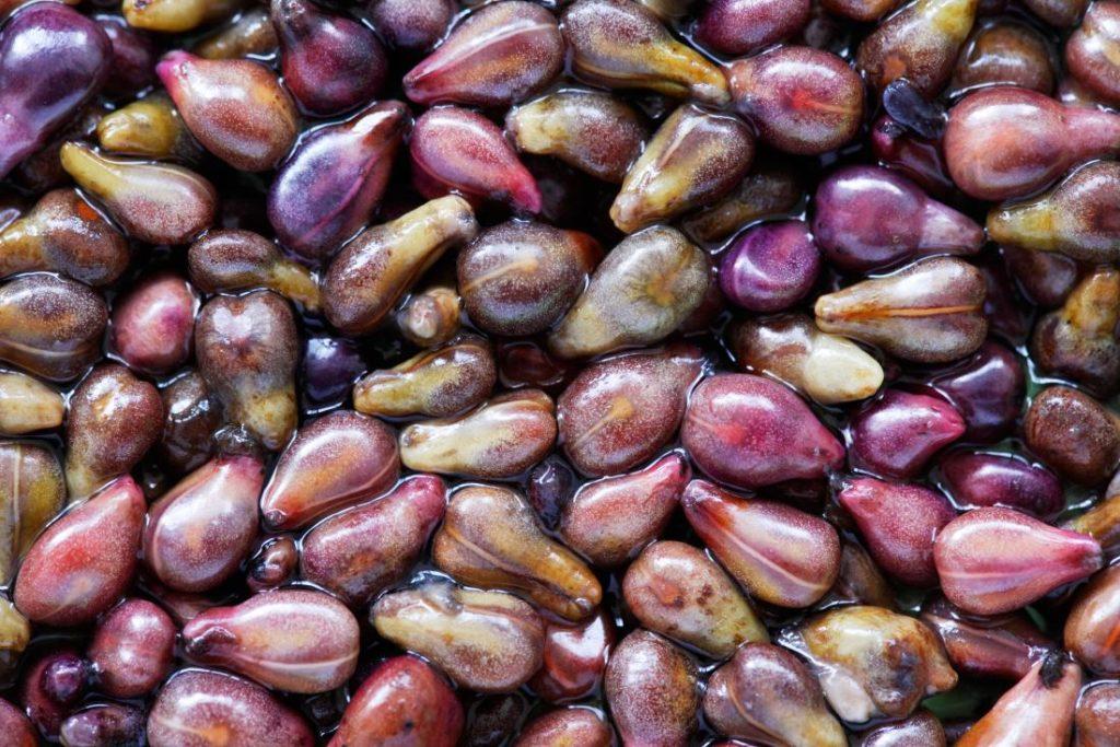 Bienfaits de l'extrait de pépins de raisin sur la santé