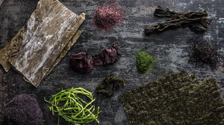 Bienfaits des légumes de mer pour la santé des chiens