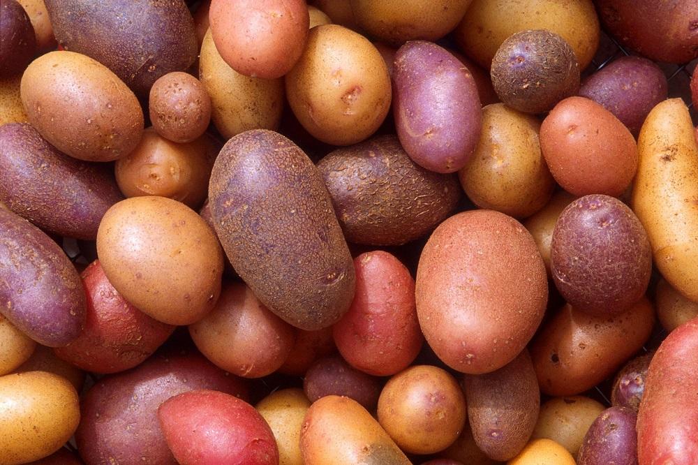 Bienfaits des pommes de terre sur la santé (+ valeur nutritive)