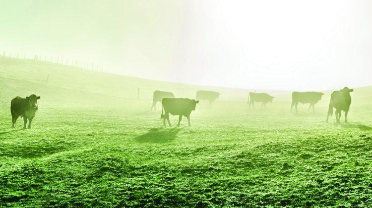Bienfaits du colostrum bovin sur la santé