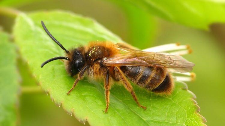 Bienfaits du venin d'abeille sur la santé