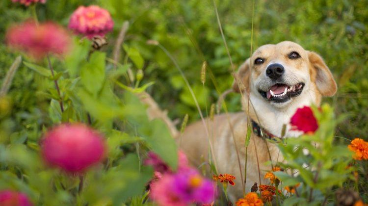 Des plantes riches en vitamines pour vos animaux de compagnie