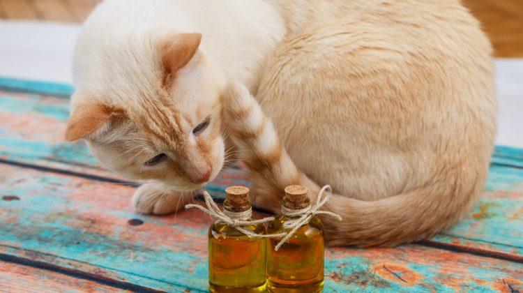Huiles essentielles pour animaux de compagnie : les meilleures et les pires huiles pour aider vos amis à quatre pattes