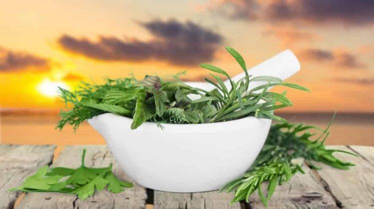 5 plantes pour l'asthme sévère