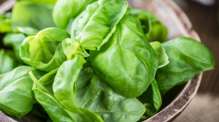 Basilic : le roi des herbes culinaires