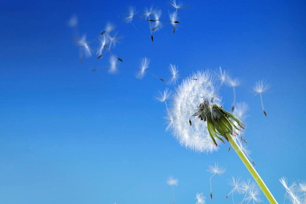 Comment gérer les symptômes de l'asthme allergique ?