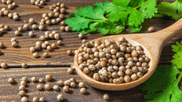 Coriandre : le secret le mieux gardé de votre panier à épices