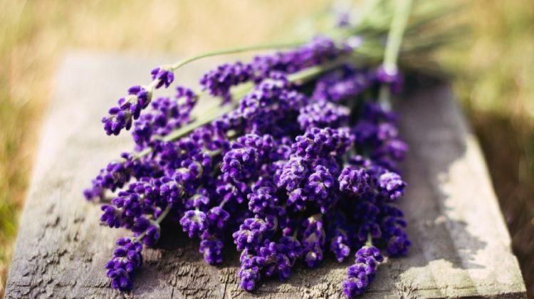 Lavande : une fleur parfumée et une herbe savoureuse