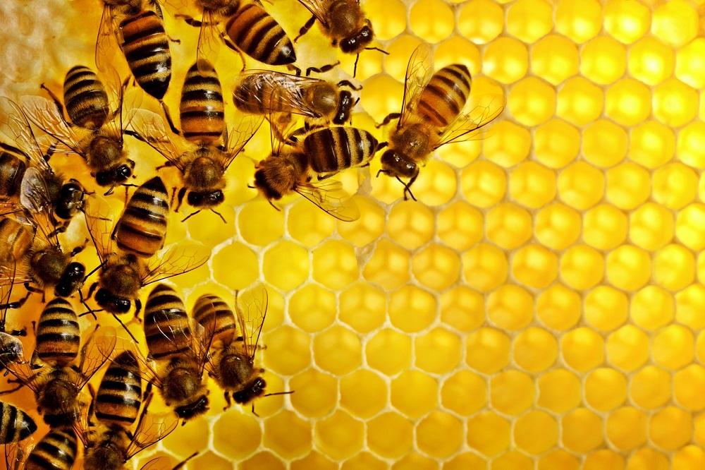 Le miel est-il végétalien ?