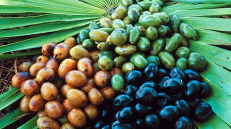 Le palmier nain peut-il aider à traiter l'acné ?