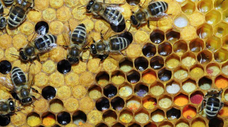Le pollen d'abeille pour les allergies