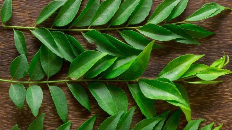 Les meilleurs substituts aux feuilles de curry