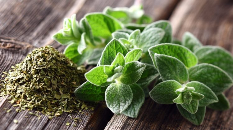 Origan : une herbe aromatique qui a du punch